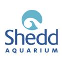 shedd-logo-thumb